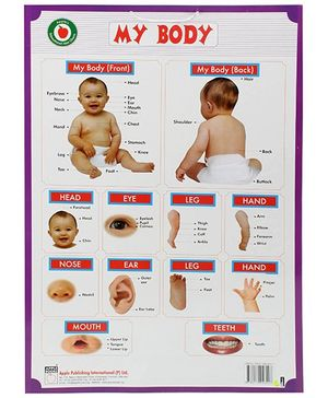 Apple Books My Body Mini Chart - English