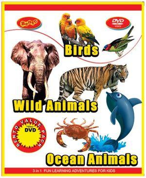 Bento Fun Learning Adventure Lost In Jungle DVD - English