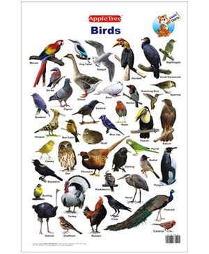 Apple Tree Educational Chart- Birds