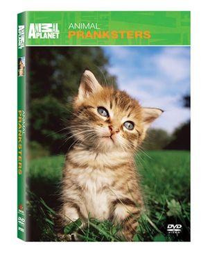 Animal Planet Animal Pranksters DVD - English