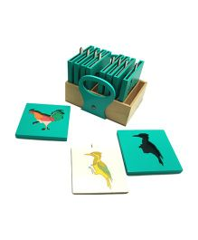 Skola Shadow Birds Educational Cards - Green