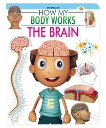 The Brain How My Body Works - English